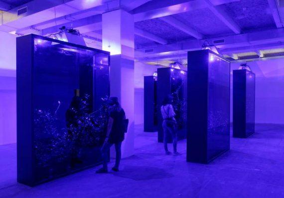 Mesk Ellil (crédit photo : Biennale d'Art Contemporain)