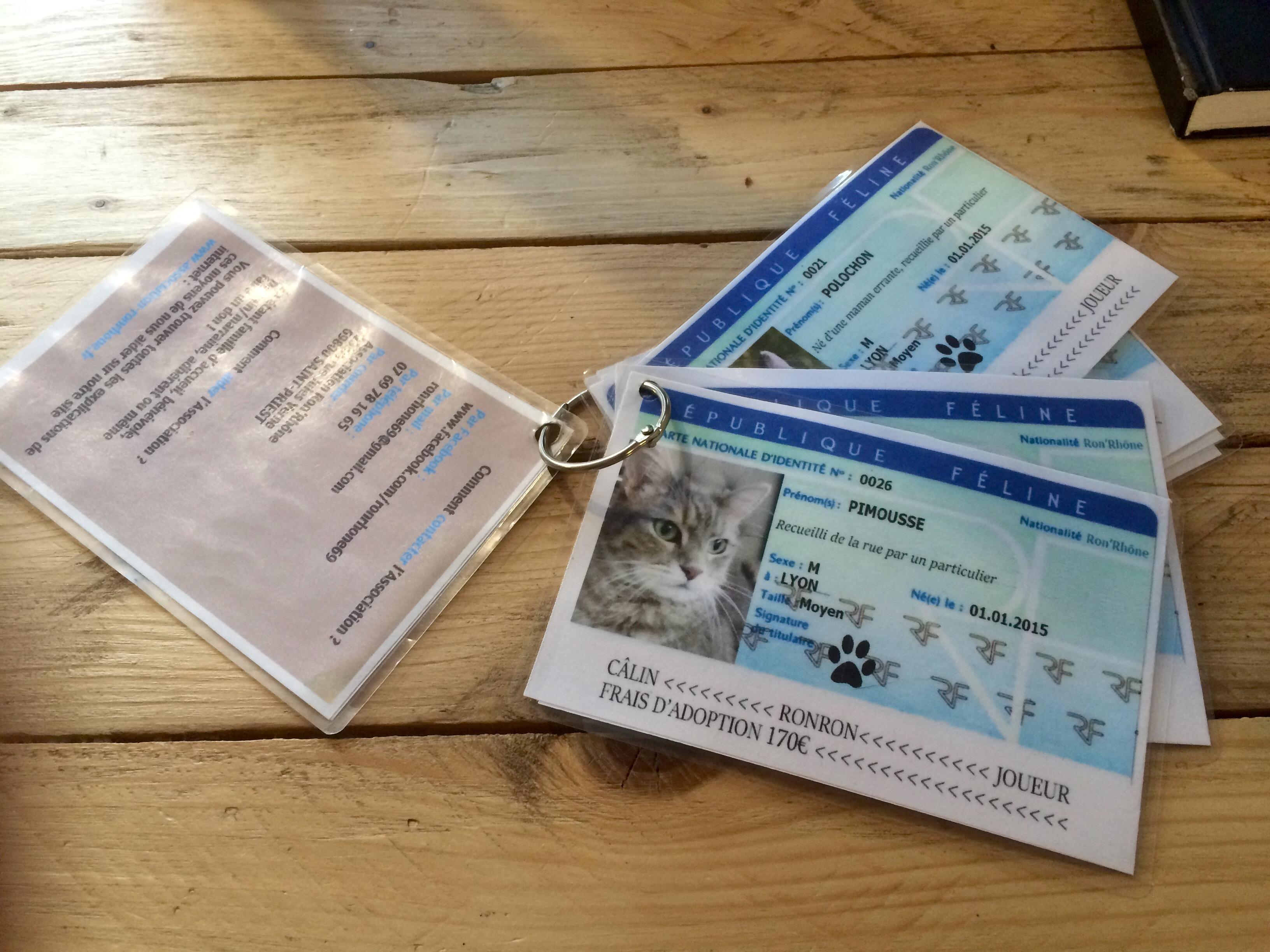 cartes d'identité chats
