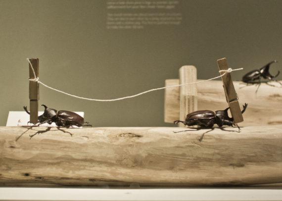 coléoptères insectes